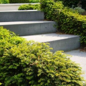 Taxus Baccata in tuin